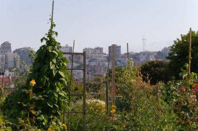 San Francisco's Tax Incentives for Urban Farming