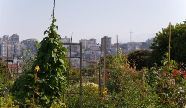 San Francisco's Tax Incentives for Urban Farming